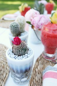 Dinner Party Cactus detail