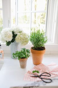 potted plants with garden scissors