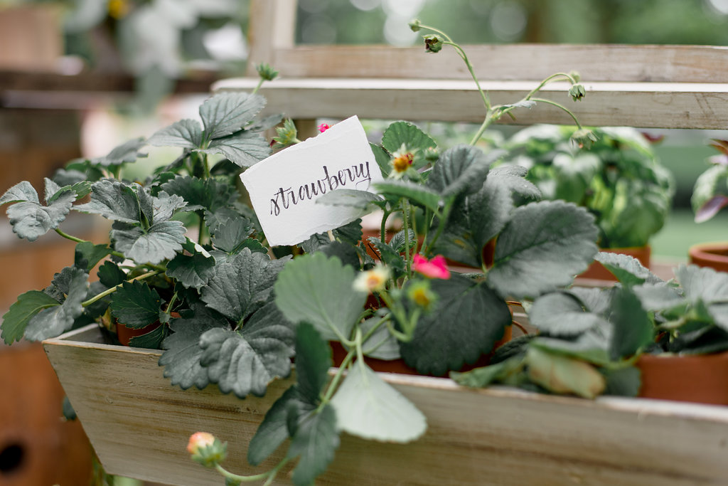 strawberry plant in fresh herbs boxes