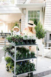 Spring Summer Gardening tips
