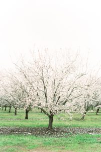 Almond Breeze California Grower