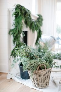 juniper in wicker basket in living room