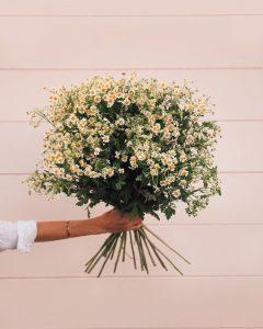chamomile daisy boquet