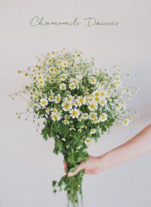 chamomile daisies bouquet