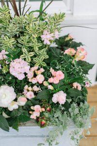 pink begonias in planter box