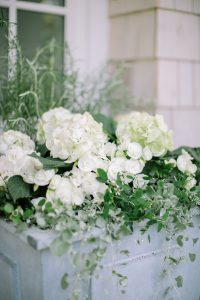 white begonias in planter box