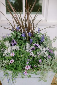 purple planter box