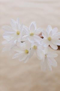 pretty paper daisies
