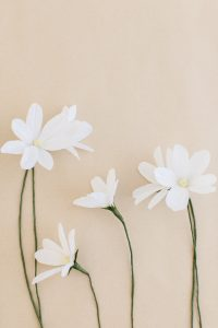 crepe paper daisy