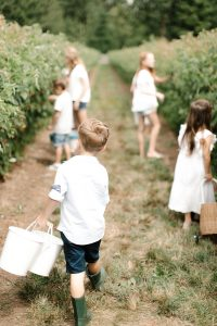 kids picking raspberries with buckets