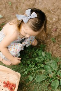 little girl with bow in her hair picking raspberries