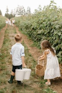 kids out picking raspberries